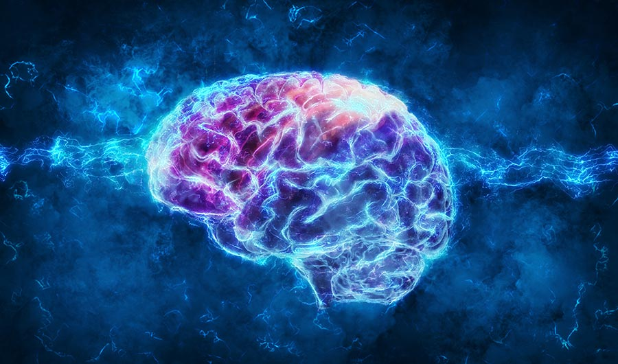 Spiruline & Cerveau